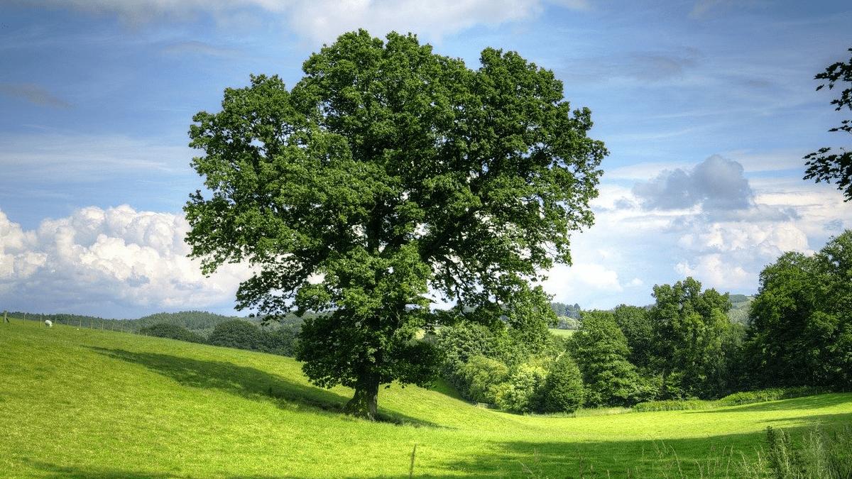 Ritorno alla Natura